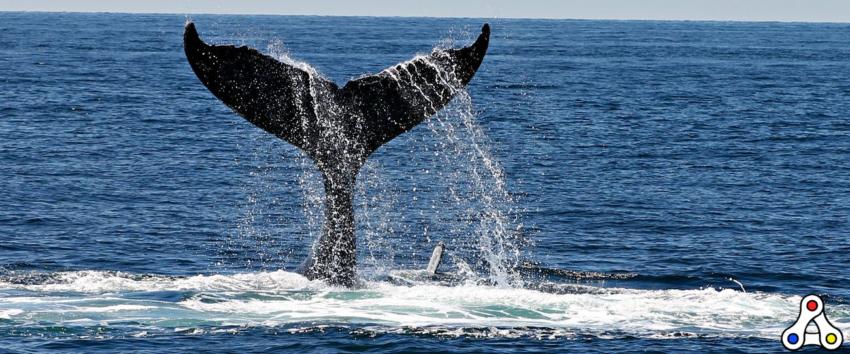 metaverse land whales
